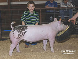 Champion Cross Champion Overall WI Futurity Sale