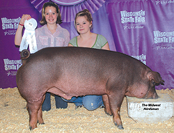 Champion Duroc WI State Fair Open Show